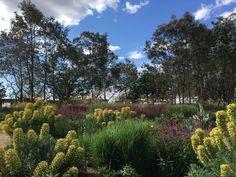 Euphorbia and Penstemon 'Blackbird' provide rhythm to this garden, designed by Michael McCoy