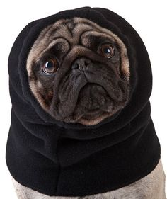 PUG Dog Hood by VoyagersK9Apparel on Etsy, $21.00