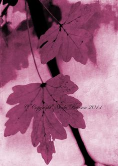 prestonchick | Leaf Art * | pink