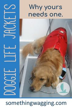 EVERY dog needs a life jacket if they're anywhere near the water. Here are 10 reasons why! And suggestions or the best ones to consider. #boatdog #doggear Dogs On Boats, Sailboat Living, Best Swimmer, Different Dogs, Kinds Of Dogs, Pet Life, Dog Accessories, Best Dogs, Cute Dogs