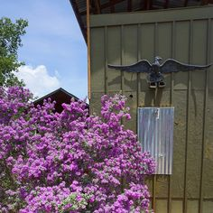 The purple sage bushes are in their full glory. This one stands outside the outdoor shower of our Private Green bath, part of our Red Room Cabin rental. The upper level of the Green Bath is a private viewing deck, perfect for watching the sunset and this beautiful bloom!