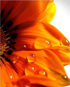 orange flower....