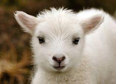 The Daily Cute: Undebatably Adorable Photos
