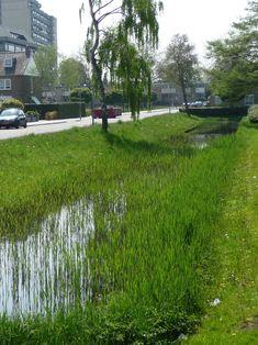 Natuurvriendelijke oever aan de Schumacherstraat in 's-Hertogenbosch