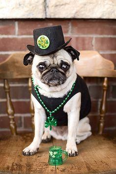 Celebrating the luck o' the Irish!