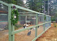 Building a Predator-Proof Chicken Run