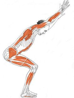 Yoga is great for injury prevention. A lot of the poses help with posture that keep your black safe. Some levels of yoga are suitable for elderly people who are concerned with injury prevention and strengthening their bodies. Pranayama, Asana, Fitness Del Yoga, Yoga Muscles, Stomach Muscles, Chakra, Yoga Works, Chair Pose, Ashtanga Yoga