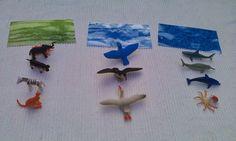 Montessori Nature: Montessori Focus: Land Water Air Activity.