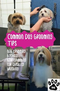 Tips From The Pros On Dog Grooming * Read more details by clicking. You are in the right place abo Dog Grooming Tips, Dog Grooming Supplies, Dog Grooming Business, Pet Paws, Dog Teeth, Dog Care Tips, Dog Agility, Goldendoodle Grooming, Poodle Grooming
