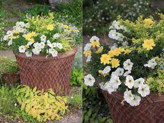 ガーデンデザイナーが教える「寄せ植え上手」のコツ - GardenStory (ガーデンストーリー)