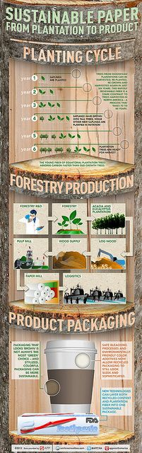 If you *must* use paper.INFOGRAPHIC: Sustainable Paper from Plantation to Product by asiapulppaper