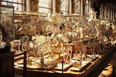 Skeletons, Muséum d'Histoire naturelle, Paris - by Laurel Duermael