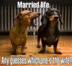 La vie de couple marié. Devinez lequel des deux est la femme?
