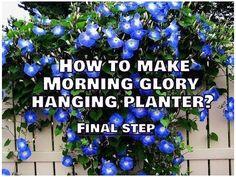 Morning Glory Plant, Morning Glory Flowers, Morning Glories, Garden Yard Ideas, Lawn And Garden, Garden Projects, Garden Fun, Summer Garden, Diy Hanging Planter