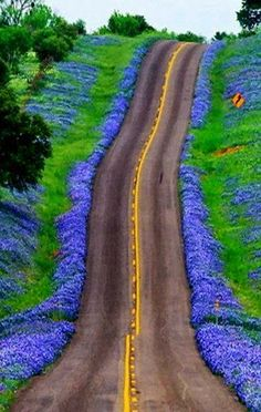 Texas Bluebonnets Highway, United States