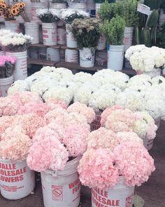 Types Of Flowers, All Flowers, Amazing Flowers, Beautiful Flowers, Flower Centerpieces, Flower Arrangements, Bloom Blossom, Happy Flowers, Flower Aesthetic