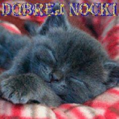 Wierszyki i gify na dobranoc: Gify na dobranoc kotki Kittens Cutest, Good Night, Humor, Texts, Cats, Nighty Night, Humour, Have A Good Night, Moon Moon