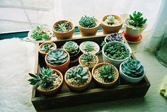 plantinhas (: