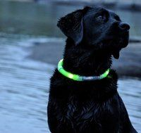 I want to put glow sticks on my dog's collar.