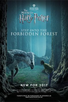 Home to an abundance of creatures, the Forbidden Forest offers shelter and protection to Hippogriffs and Acromantula among many others.