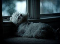 Mine ADORES looking out the window :)