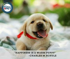 Quote of the day. #timeforpet #dogs #puppy #puppylove #pup #dogquotes #doglove #dogcare #petquotes #animallovers #animals #animallove #quotes #animalquotes #quoteoftheday #petcare #petlove #pet #pets #bangalore #monday