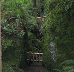 Gated off cave at Talus Rocks--a great hike at Tiger Mountain near Issaquah, WA
