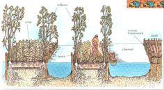 estructura de una chinampa