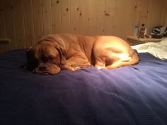 Snoozing at the cottage