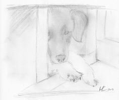 Siska sketch - Pencil drawing / Bleistiftzeichnung / Disegno a matita #dog #sketch #art #pencildrawing #drawing #zeichnung #disegno Der Computer, Sketches, Drawing, Children Drawing, Animals, Photo Illustration, Drawings, Sketching, Sketch