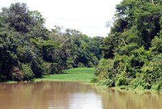 Rio Tefé e Reserva Florestal, no município de Tefé, estado do Amazonas, Brasil.  Fotografia:  Wilson Dias/ABr.