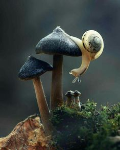 Snail on a mushroom, Photo by Kessie Lo Nature Animals, Animals And Pets, Baby Animals, Funny Animals, Cute Animals, Beautiful Creatures, Animals Beautiful, Animal Photography, Nature Photography