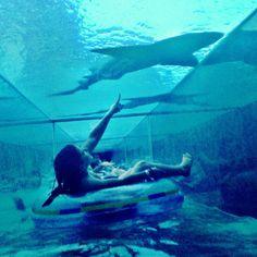 Get up close and personal with marine animals at Atlantis Resort - Paradise Island, Bahamas