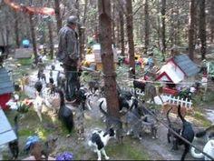 Caboodle Ranch - a cat rescue haven!!!