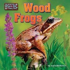 Presents information about wood frogs and how they survive winter temperatures in hibernation.
