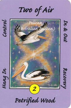 2. Air (Pelican) Australian Animal Tarot Deck.   Ebb & Flow of money – coming in and going out.