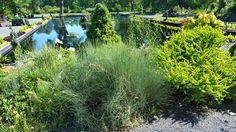 le genre Ephedra (au premier plan de la photo) Les plantes du genre Ephedra sont de petits arbustes presque toujours dioïques, très ramifiés, aux tiges articulées. Les fleurs sont petites, jaune verdâtre, les ovules sont enfermés dans une enveloppe assimilable à un ovaire imparfait. Si on peut rencontrer de nombreuses espèces du genre Ephedra en Amérique du Nord, deux espèces sont notables en France et en Suisse, c'est le raisin de mer (Ephedra distachya) nommé ainsi à cause des écailles…