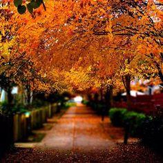 """❤️"" Photo taken by @falling.into.autumn on Instagram, pinned via the InstaPin iOS App! http://www.instapinapp.com (10/03/2015)"