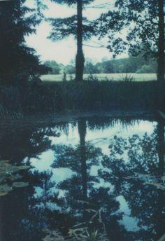 Imagen de grunge, nature, and tree