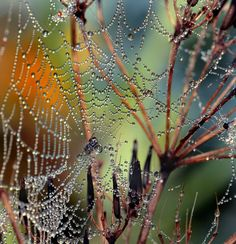 Step into my web said the spider....   Saved to Webs and Weavings