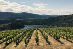Viader Vineyards in Napa Valley, USA / photo by Grant Heinlein