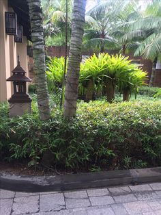 Entrance some unusual tree plants - had palms in a square and 2 layers of hedges
