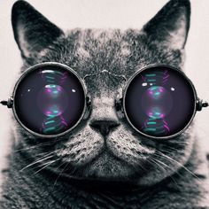 I love this cat! he has good music taste ! Cute Cats And Kittens, Cool Cats, Steampunk Cat, Falling In Reverse, Owl, Of Mice And Men, Thing 1, Pierce The Veil, Imagine Dragons