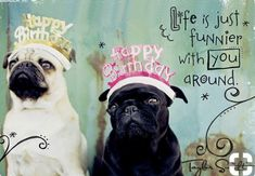 Ecard a lifetime of birthday wishes happy birthday ecard - Happy birthday images Animal Pugs