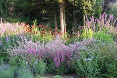 kleurrijke borderplanten - Google zoeken