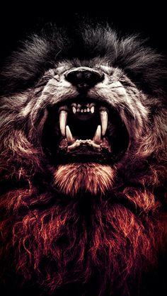 Lion of Judah Wallpapers images) Lion Live Wallpaper, Wild Animal Wallpaper, Iphone Wallpaper, Lion Images, Lion Pictures, Lion Kingdom, Lion Sketch, Lion Photography, Fierce Lion