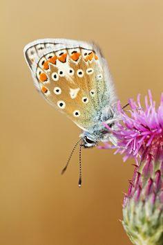 """Blue Portrait by Simon Roy on 500px / """"Passa uma borboleta por diante de mim E pela primeira vez no Universo eu reparo Que as borboletas não têm cor nem movimento, Assim como as flores não têm perfume nem cor. A cor é que tem cor nas asas da borboleta, No movimento da borboleta o movimento é que se move, O perfume é que tem perfume no perfume da flor. A borboleta é apenas borboleta E a flor é apenas flor."""" (Alberto Caeiro)"""