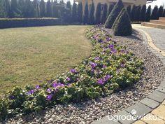 Any ogród mały czyli wygrana walka z ugorem - strona 2181 - Forum ogrodnicze - Ogrodowisko