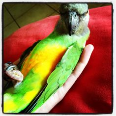 Zeus chilling on her back... Clever little Senegal. See her on YouTube: http://www.youtube.com/watch?v=zKdT6thDrg8