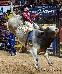 Bull Riding and Rodeo: One of the World's Most Dangerous Sports Rodeo Cowboys, Real Cowboys, Vaquera Sexy, Dangerous Sports, Professional Bull Riders, Bucking Bulls, Rodeo Time, Bull Riding, World Of Sports